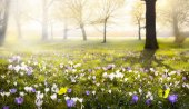 Fundo abstrato ensolarado linda Primavera — Fotografia Stock
