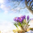 Art spring flowers — Stockfoto #65299875