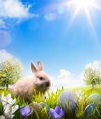 Easter bunny and Easter eggs on spring field — Stock Photo
