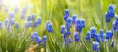 Spring and easter background with spring flowers — Stock Photo