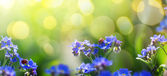Art spring or summer background with forget-me-not flower — Stok fotoğraf