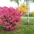 A beautiful bush in the park — Stock Photo #58117853