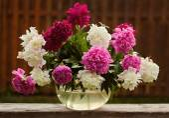 Ramo de flores de peonía — Foto de Stock