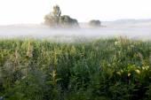 Mlhavé ráno — Stockfoto