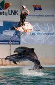 Dolphin show in the Dolphinarium — Stok fotoğraf