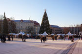 The main christmas tree of Vilnius — 图库照片