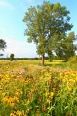 Evening Prairie in Illinois — Stock Photo