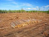 Northern Michigan Logging Operation — Stock Photo