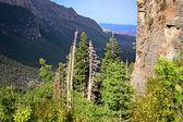 Spring Mountains National Recreation Area Nevada — Stock Photo