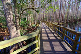 Highlands Hammock State Park Florida — Stock Photo