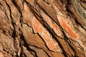 Rock Layer Texture Background — Stock Photo