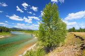 North Fork Flathead River Montana — Stock Photo