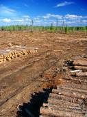 Michigan Northwoods Logging Operation — Stock Photo