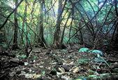 Moorea Rainforest Hiking Trail Landscape — Stockfoto