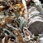 Autumn leaves — Stock Photo #52803343