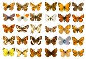蝶セット — ストック写真