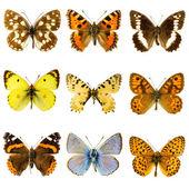 Ensemble papillon — Photo