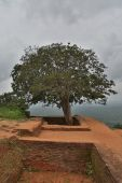 Sigiriya, Sri Lanka — Fotografia Stock
