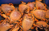 Crabs on the market — Stock Photo