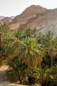 Mountain oasis Chebika in Tunisia — Stock Photo