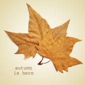 Autumn is here — Stock Photo