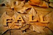 Fall word and autumn leaves — Stock Photo