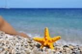 Man and starfish on the beach — Zdjęcie stockowe