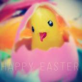 Teddy chick in easter egg and the text happy easter — Stock Photo