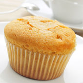 Magdalena, typical spanish plain muffin — Stock Photo
