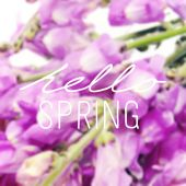 Flowers and the text hello spring — Fotografia Stock