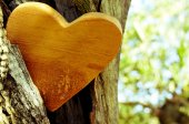 Wooden heart in the hollow of a tree — Stock Photo