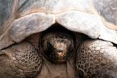 Tortoise — Stock Photo