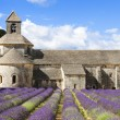 Abbey of Senanque and lavender flowers — Stock Photo #57828793