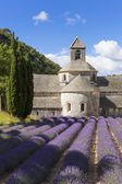 Abbey of Senanque and lavender field — Stock fotografie