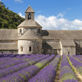 Abbey of Senanque and lavander field — Stock Photo