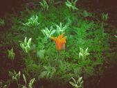 Retro look Tulips — Stock Photo