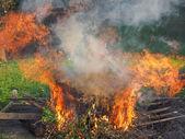 Fogo ardente — Fotografia Stock