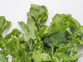 Rocket salad — Stock Photo