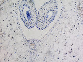 Lily ovary micrograph — Stock Photo