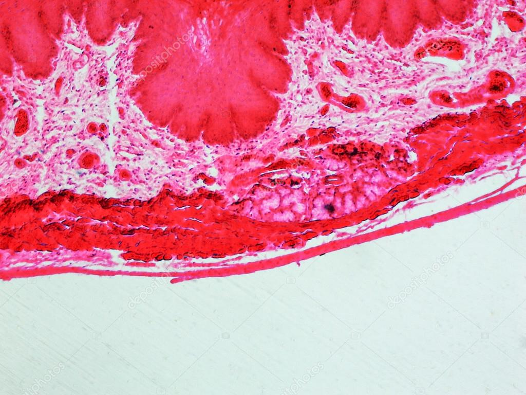 Микрограф фото