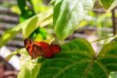 Två fjärilar parning — Stockfoto