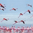 Flying pink  flamingos — Stok fotoğraf #62110251