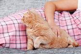 Genç kadın ile kedi — Stok fotoğraf
