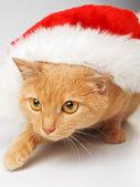кошка с шляпу санта — Стоковое фото
