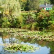 Monet's water lily pond in Giverny — Stock Photo #62200295