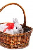 White rabbit with ribbon in basket — Stock Photo