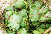 Betel Nut leaves — Stock Photo