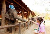 杜茎山大象营地,泰国 — 图库照片