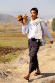 Burmese man carring wood — Stock Photo
