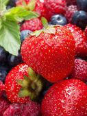 Berries, close up — Stock Photo